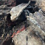 Asbestos in Soil